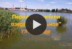 Пернатые жители озера Кагального г. Гл