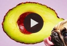17 токсичных для собак продуктов