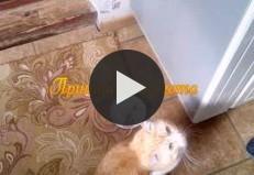 Мой кот <<Тимофей>>