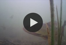 Подводная съемка, озеро Белое